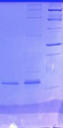 Mucin expression gel